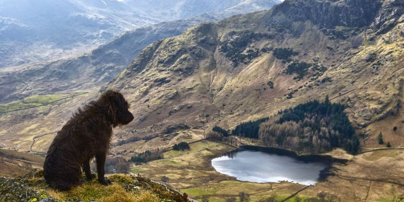 dogs in lakes 1